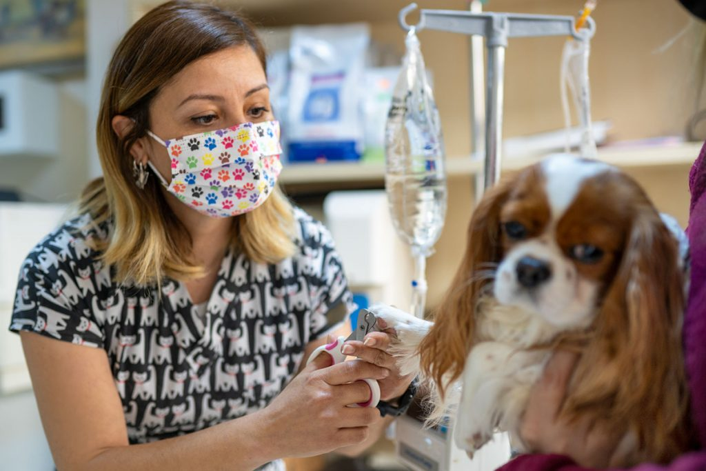 Female Vet Cutting the Dog's Nails; business owner
