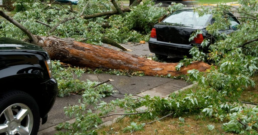 A fallen tree on the road between two vehicles, as a result of straight-line winds/hurricane